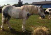 araki-horse-eating-hay