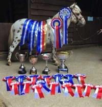 araki-horse-winners