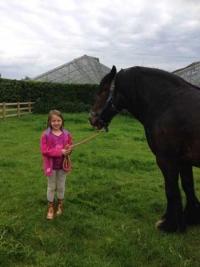 araki-horse-with-children