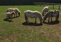 araki-horses-in-the-paddock