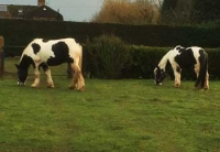araki-horses