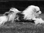 araki-dog