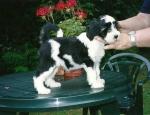 araki-puppyinhand