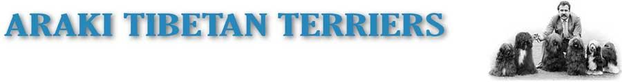 Araki Tibetan Terriers